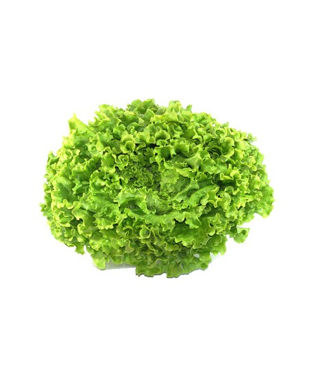 Salade BATAVIA