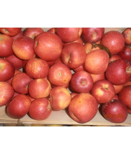 caisse de pommes